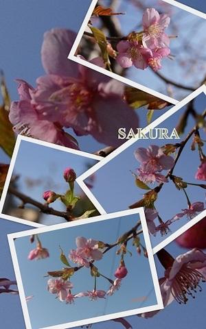 Sakurajpg
