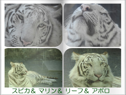 2cats